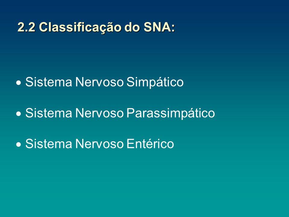 2.2 Classificação do SNA: Sistema Nervoso Simpático Sistema Nervoso Parassimpático Sistema Nervoso Entérico