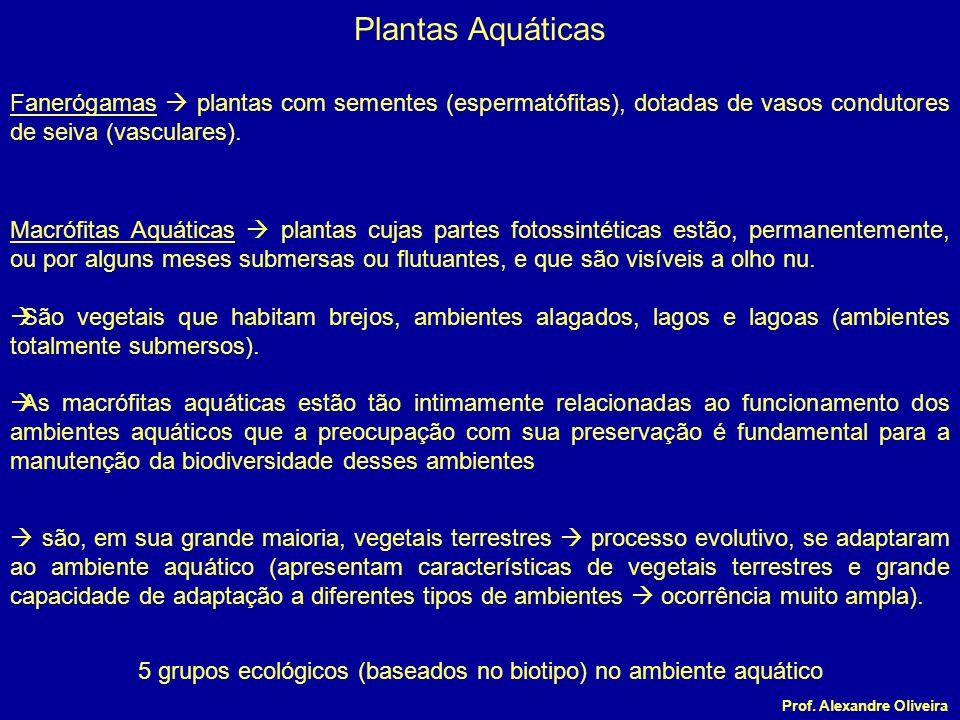Plantas Aquáticas Macrófitas Aquáticas plantas cujas partes fotossintéticas estão, permanentemente, ou por alguns meses submersas ou flutuantes, e que