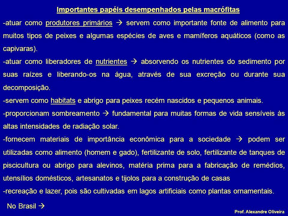 Prof. Alexandre Oliveira Importantes papéis desempenhados pelas macrófitas -atuar como produtores primários servem como importante fonte de alimento p