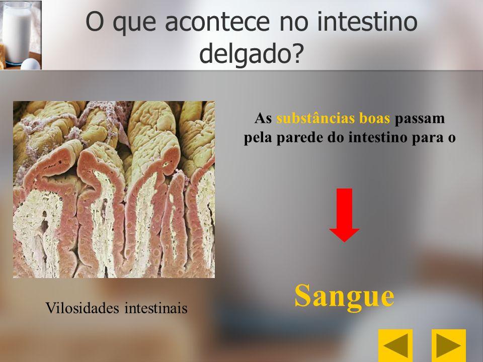 O que acontece no intestino delgado? Vilosidades intestinais As substâncias boas passam pela parede do intestino para o Sangue