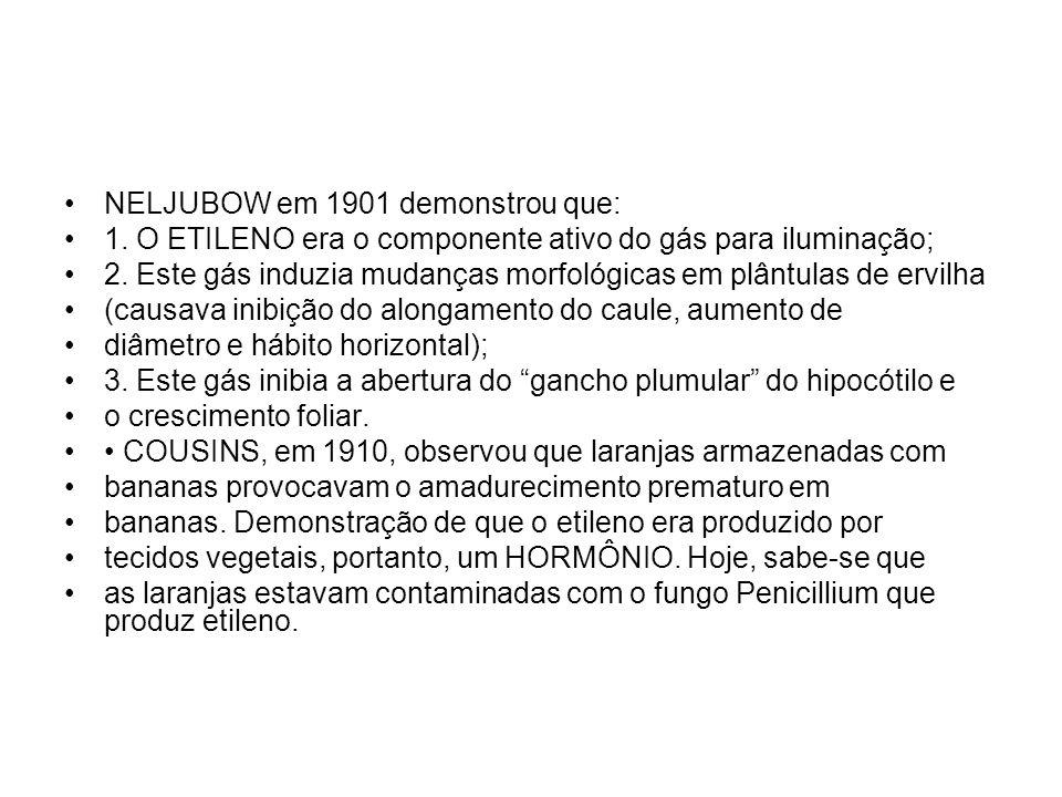 NELJUBOW em 1901 demonstrou que: 1. O ETILENO era o componente ativo do gás para iluminação; 2. Este gás induzia mudanças morfológicas em plântulas de
