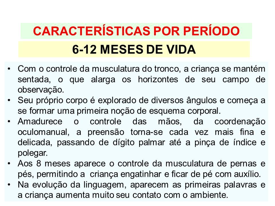CARACTERÍSTICAS POR PERÍODO 6-12 MESES DE VIDA Com o controle da musculatura do tronco, a criança se mantém sentada, o que alarga os horizontes de seu