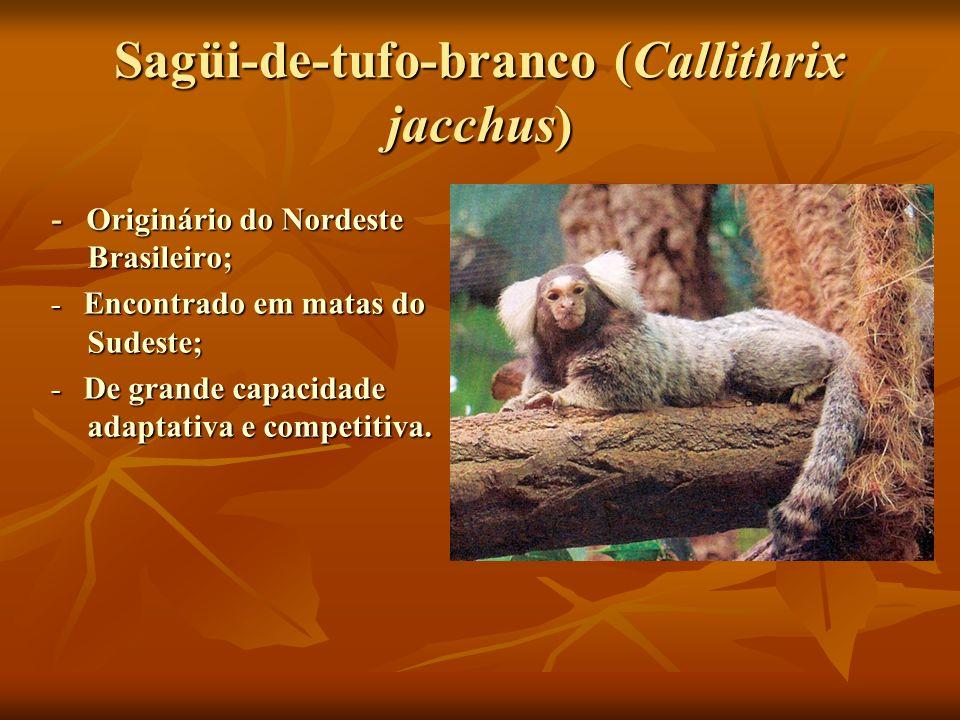 Sagüi-de-tufo-branco (Callithrix jacchus) - Originário do Nordeste Brasileiro; - Encontrado em matas do Sudeste; - De grande capacidade adaptativa e c