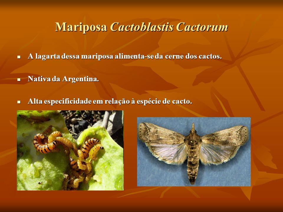 Mariposa Cactoblastis Cactorum A lagarta dessa mariposa alimenta-se da cerne dos cactos. A lagarta dessa mariposa alimenta-se da cerne dos cactos. Nat