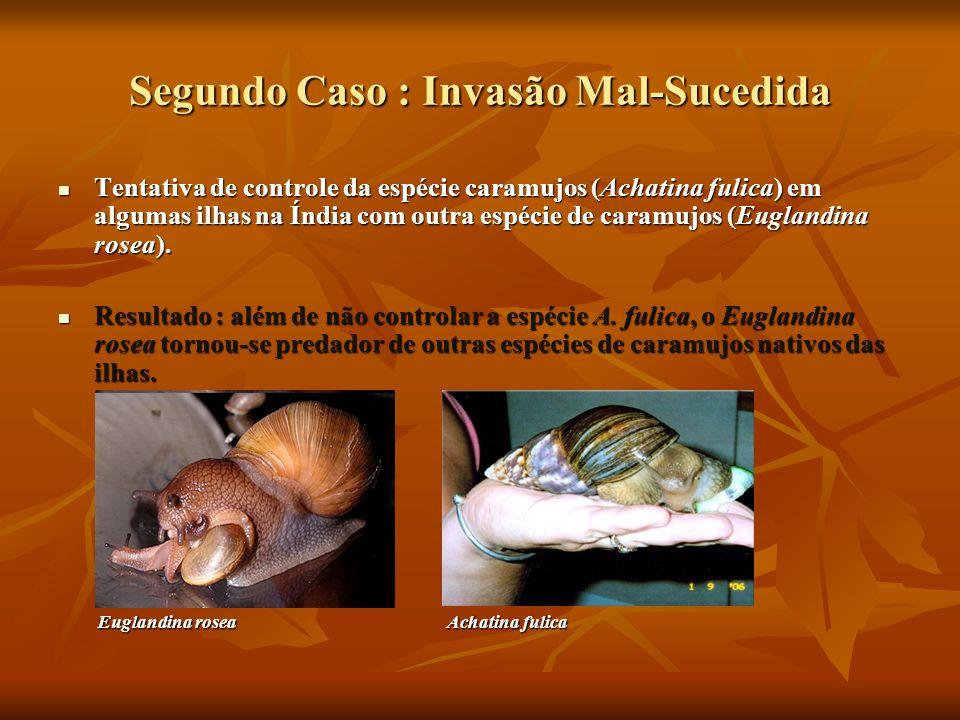Segundo Caso : Invasão Mal-Sucedida Tentativa de controle da espécie caramujos (Achatina fulica) em algumas ilhas na Índia com outra espécie de caramu