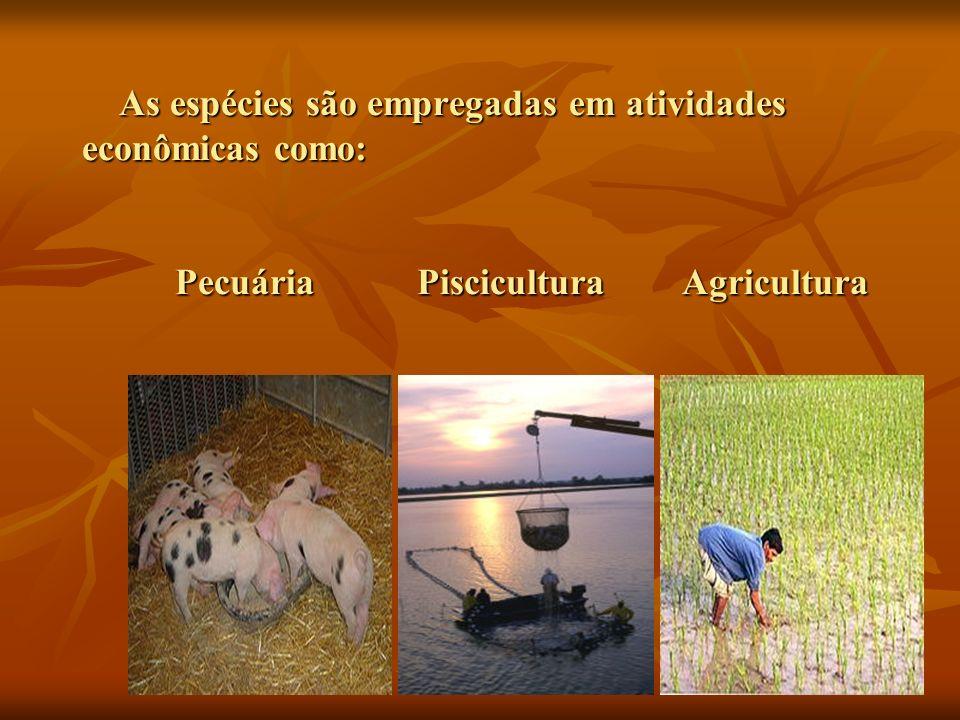 As espécies são empregadas em atividades econômicas como: Pecuária Piscicultura Agricultura As espécies são empregadas em atividades econômicas como: