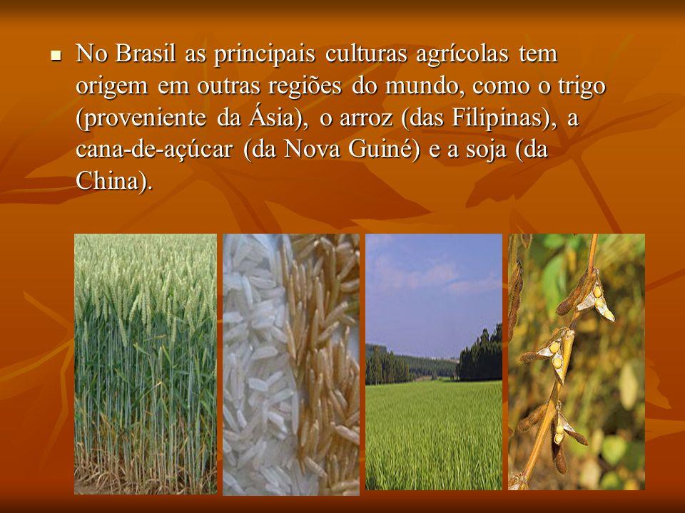 No Brasil as principais culturas agrícolas tem origem em outras regiões do mundo, como o trigo (proveniente da Ásia), o arroz (das Filipinas), a cana-