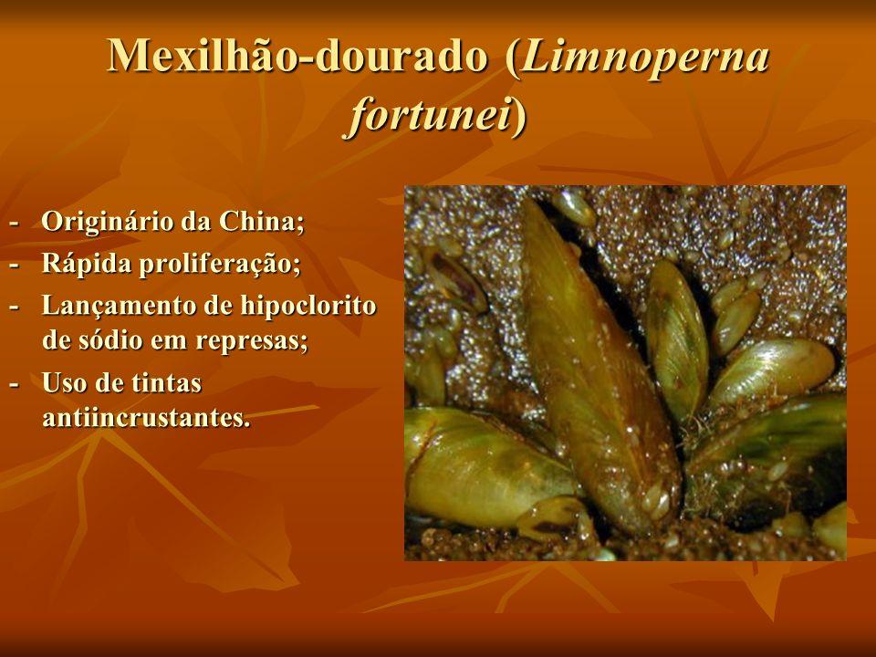 Mexilhão-dourado (Limnoperna fortunei) - Originário da China; - Rápida proliferação; - Lançamento de hipoclorito de sódio em represas; - Uso de tintas
