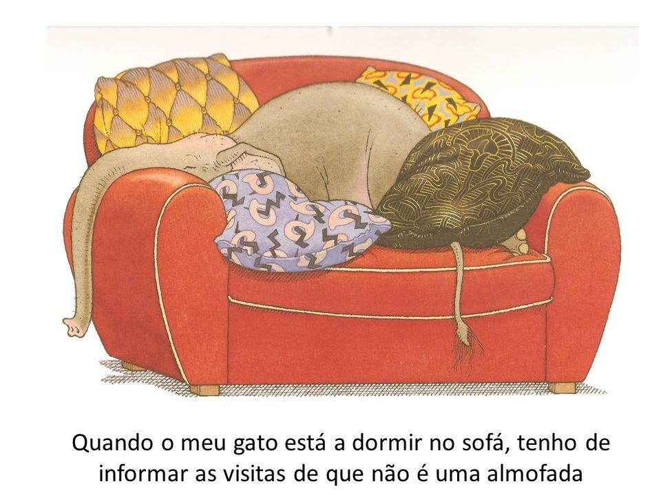 Mas quase sempre o meu gato dispensa perfeitamente o sofá.