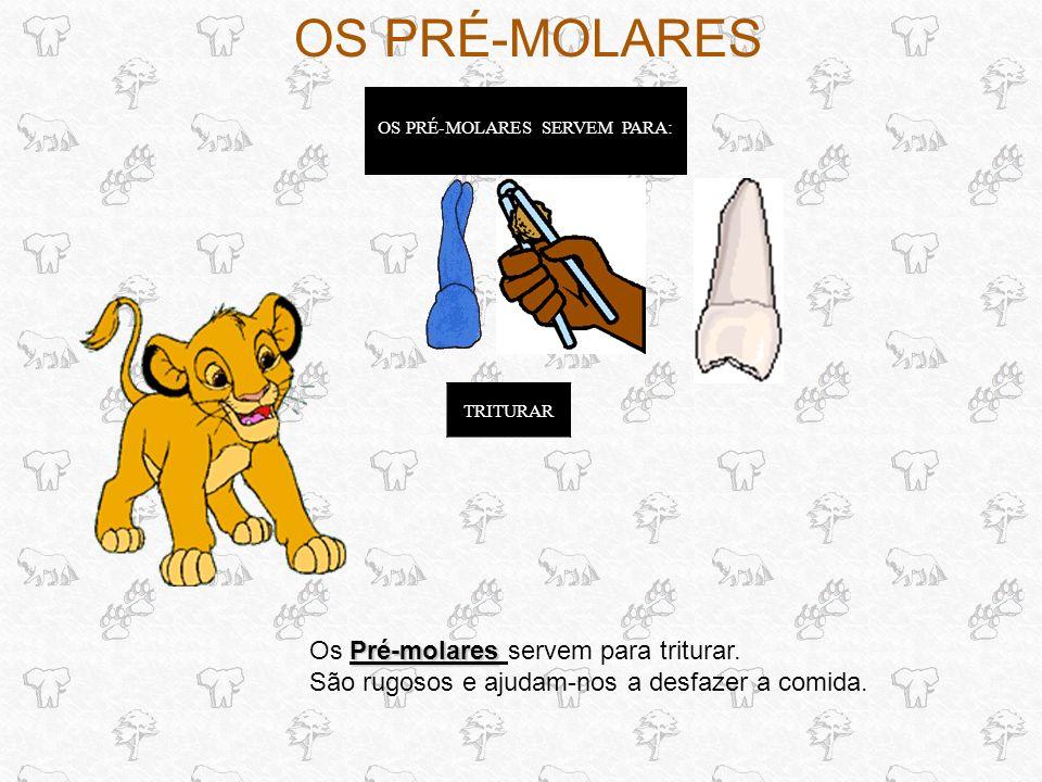 OS MOLARES OS MOLARES SERVEM PARA: Molares Os Molares servem para moer.