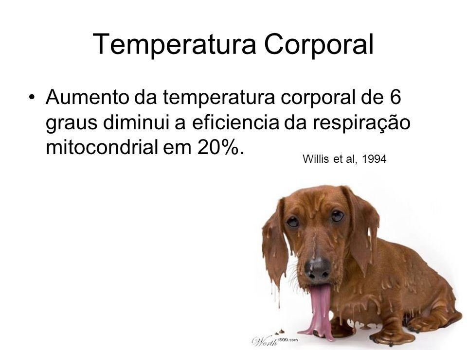 Temperatura Corporal Aumento da temperatura corporal de 6 graus diminui a eficiencia da respiração mitocondrial em 20%. Willis et al, 1994