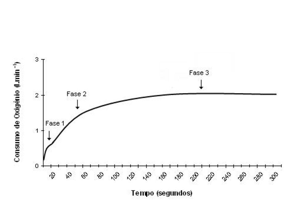Ventilação Custo de O2 para aumento da ventilação durante exercício responsável por 18 a 23% do componente lento.