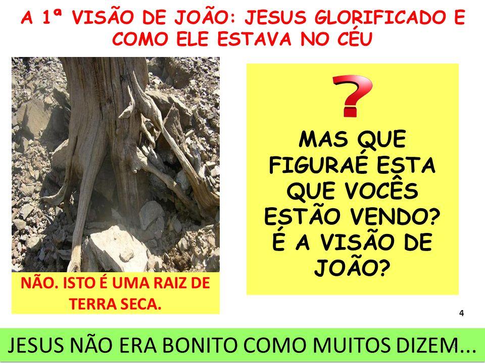 A 1ª VISÃO DE JOÃO: JESUS GLORIFICADO E COMO ELE ESTAVA NO CÉU MAS QUE FIGURAÉ ESTA QUE VOCÊS ESTÃO VENDO? É A VISÃO DE JOÃO? NÃO. ISTO É UMA RAIZ DE
