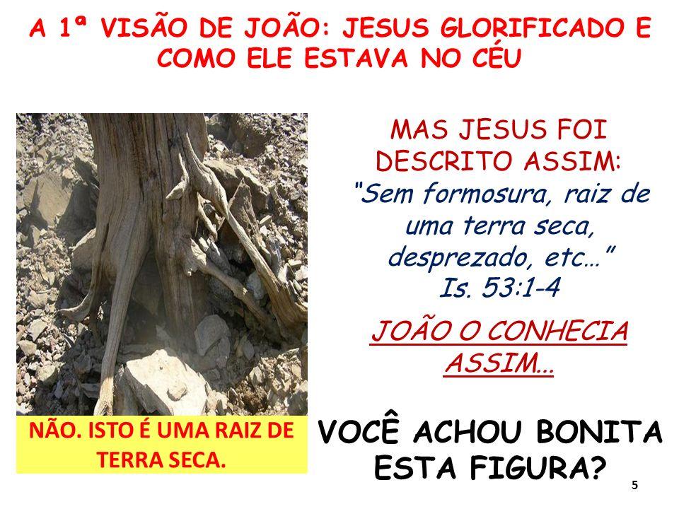 A 1ª VISÃO DE JOÃO: JESUS GLORIFICADO E COMO ELE ESTAVA NO CÉU NÃO. ISTO É UMA RAIZ DE TERRA SECA. VOCÊ ACHOU BONITA ESTA FIGURA? MAS JESUS FOI DESCRI