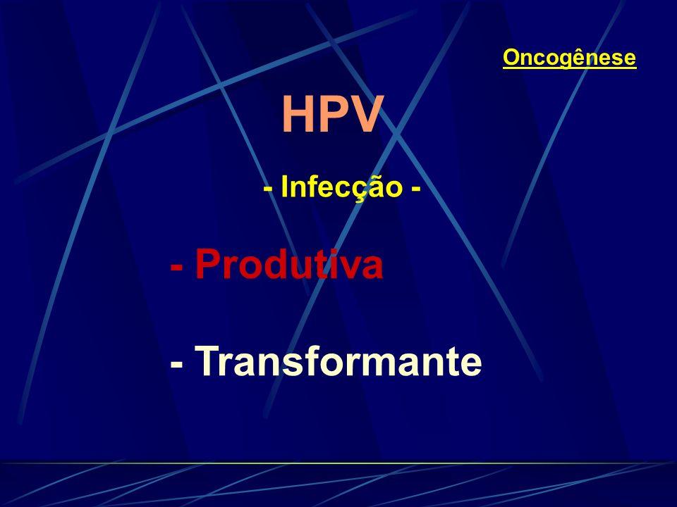 HPV - Infecção - Oncogênese - Produtiva - Transformante
