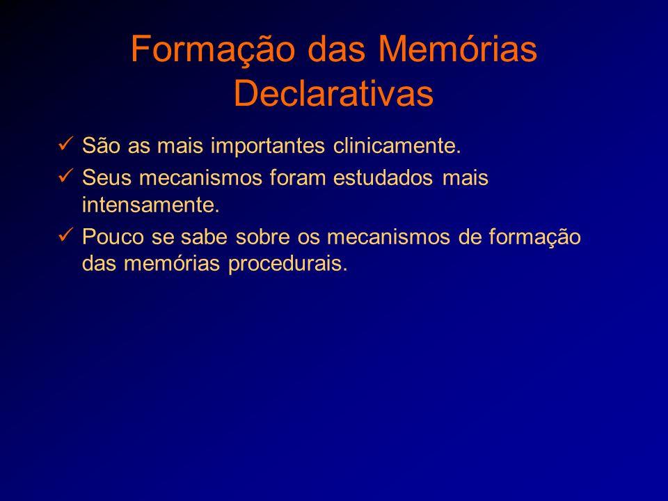 Formação das Memórias Declarativas São as mais importantes clinicamente. Seus mecanismos foram estudados mais intensamente. Pouco se sabe sobre os mec