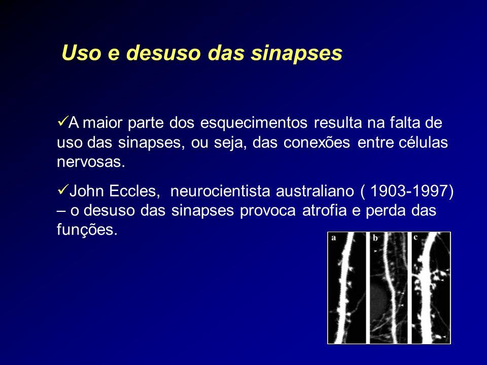 A maior parte dos esquecimentos resulta na falta de uso das sinapses, ou seja, das conexões entre células nervosas. John Eccles, neurocientista austra