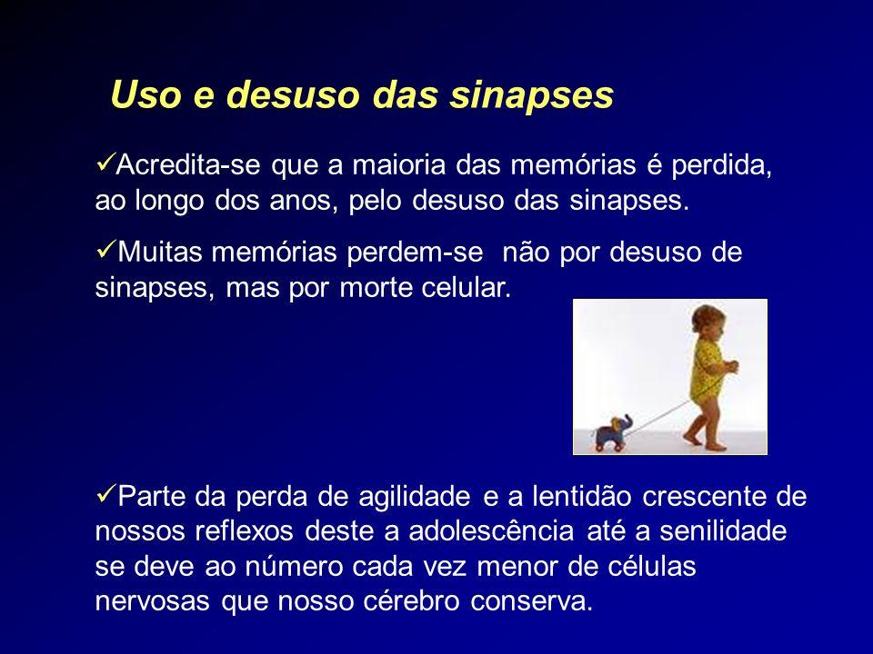 Acredita-se que a maioria das memórias é perdida, ao longo dos anos, pelo desuso das sinapses. Muitas memórias perdem-se não por desuso de sinapses, m