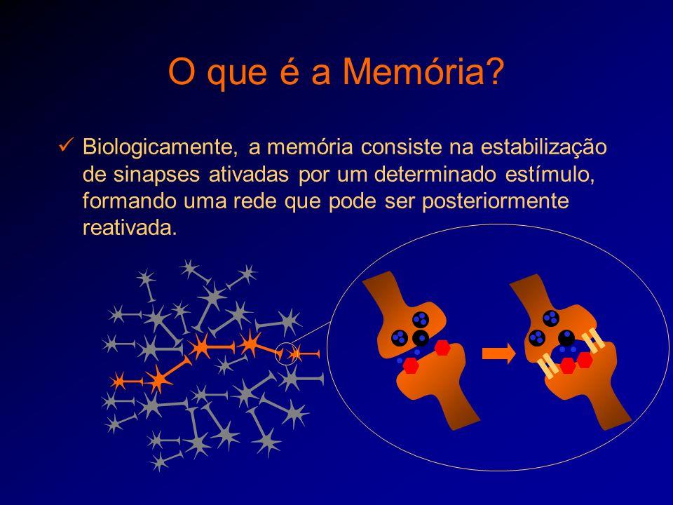 O que é a Memória? Biologicamente, a memória consiste na estabilização de sinapses ativadas por um determinado estímulo, formando uma rede que pode se