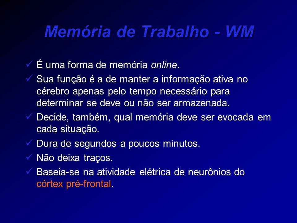 Memória de Trabalho - WM É uma forma de memória online. Sua função é a de manter a informação ativa no cérebro apenas pelo tempo necessário para deter