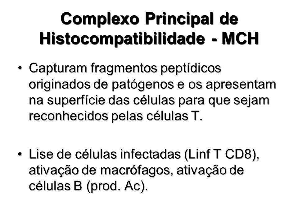 Complexo Principal de Histocompatibilidade - MCH Capturam fragmentos peptídicos originados de patógenos e os apresentam na superfície das células para