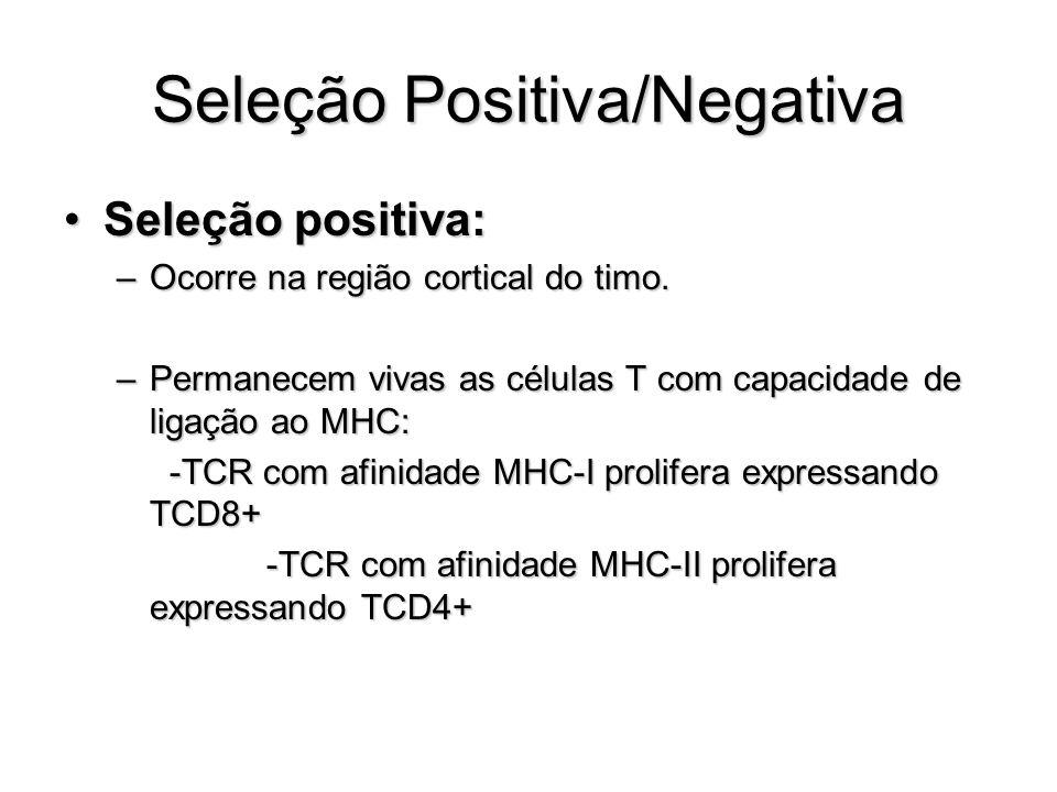 Seleção Positiva/Negativa Seleção positiva:Seleção positiva: –Ocorre na região cortical do timo. –Permanecem vivas as células T com capacidade de liga
