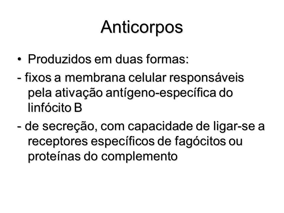 Anticorpos Produzidos em duas formas:Produzidos em duas formas: - fixos a membrana celular responsáveis pela ativação antígeno-específica do linfócito