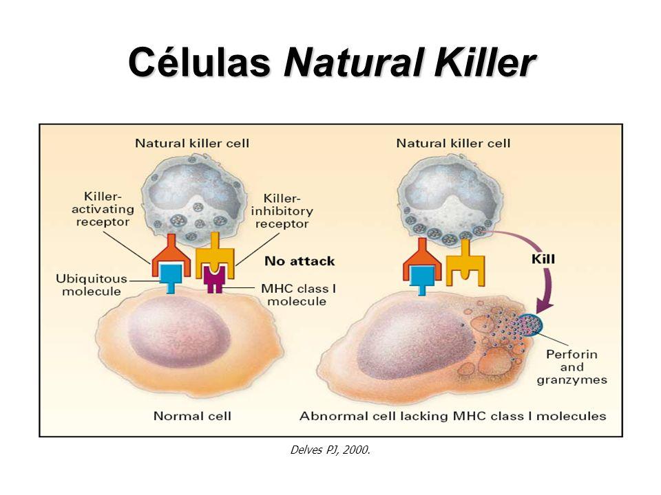 Células Natural Killer Delves PJ, 2000.