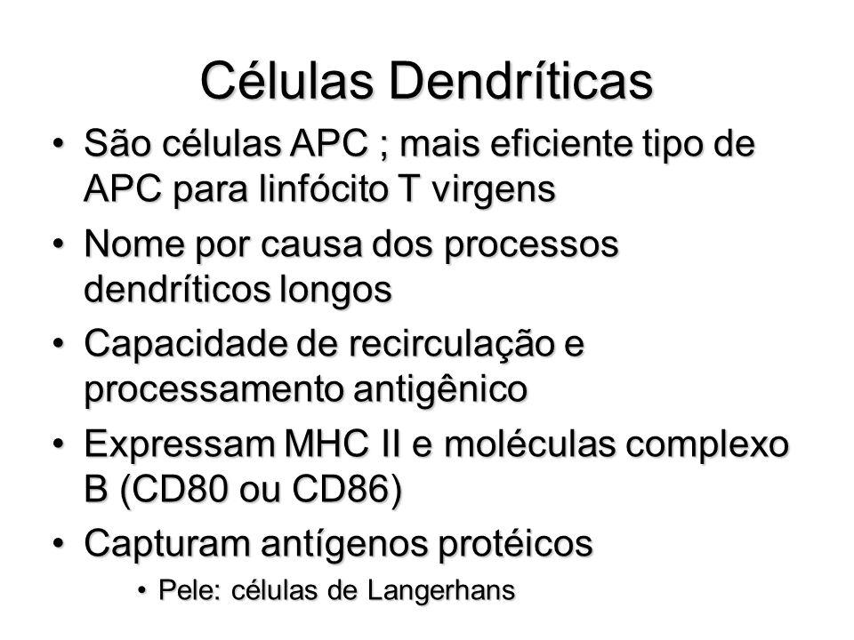 Células Dendríticas São células APC ; mais eficiente tipo de APC para linfócito T virgensSão células APC ; mais eficiente tipo de APC para linfócito T