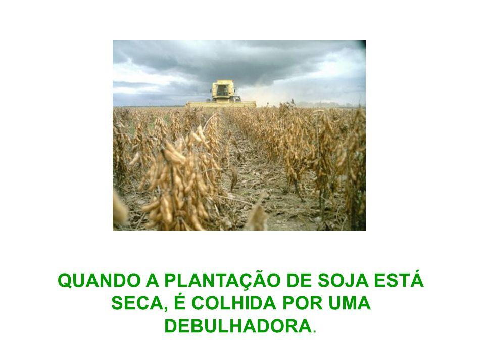 QUANDO A PLANTAÇÃO DE SOJA ESTÁ SECA, É COLHIDA POR UMA DEBULHADORA.