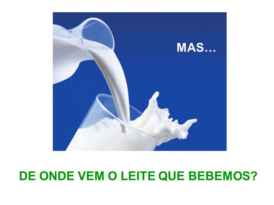 Beber leite faz-nos ficar fortes e saudáveis!