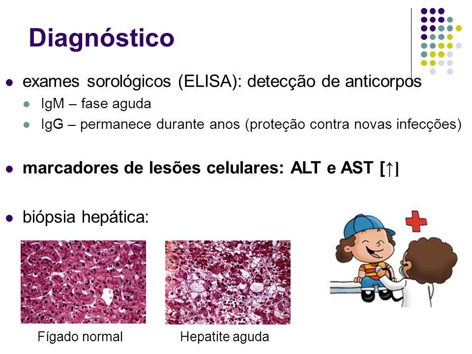 Diagnóstico exames sorológicos (ELISA): detecção de anticorpos IgM – fase aguda IgG – permanece durante anos (proteção contra novas infecções) marcado