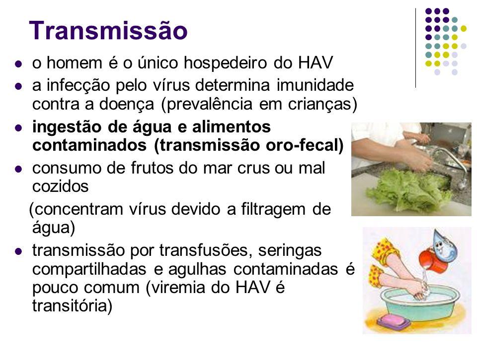 Transmissão o homem é o único hospedeiro do HAV a infecção pelo vírus determina imunidade contra a doença (prevalência em crianças) ingestão de água e