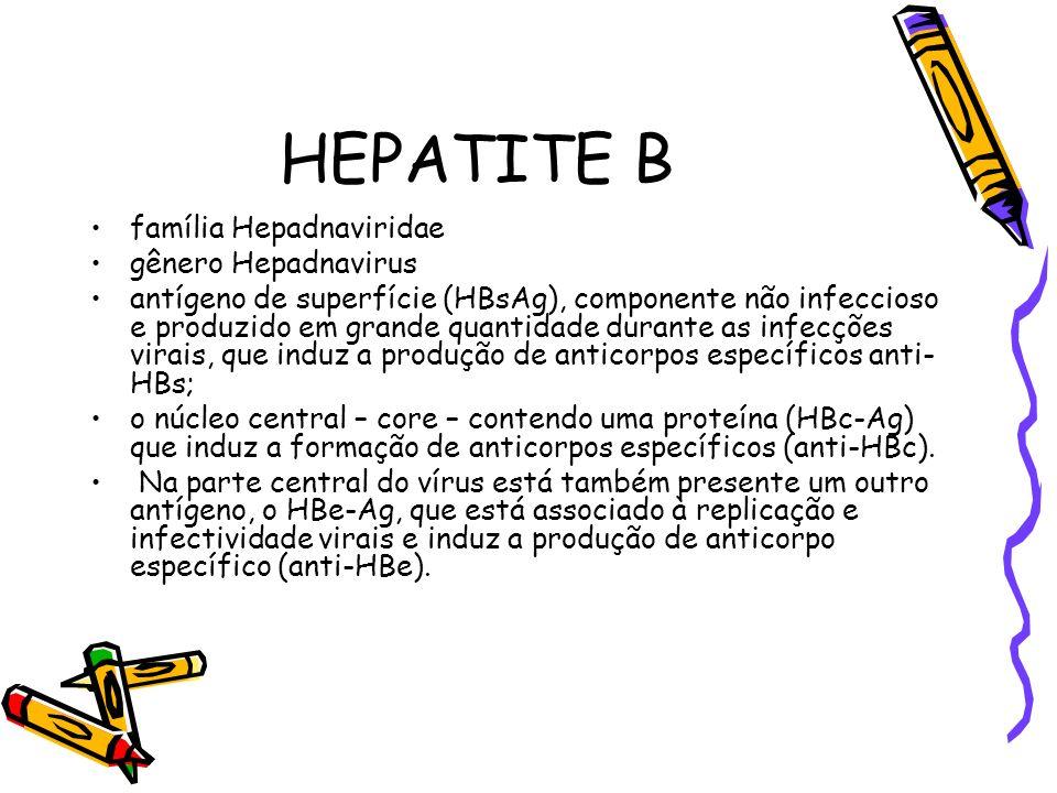 HEPATITE B família Hepadnaviridae gênero Hepadnavirus antígeno de superfície (HBsAg), componente não infeccioso e produzido em grande quantidade duran