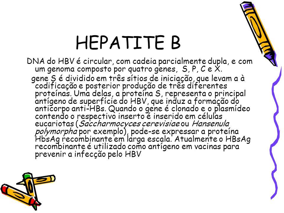 HEPATITE B DNA do HBV é circular, com cadeia parcialmente dupla, e com um genoma composto por quatro genes, S, P, C e X. gene S é dividido em três sít
