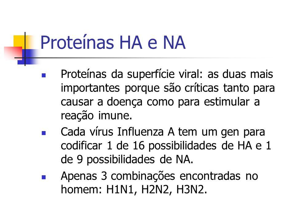 Proteínas HA e NA Proteínas da superfície viral: as duas mais importantes porque são críticas tanto para causar a doença como para estimular a reação