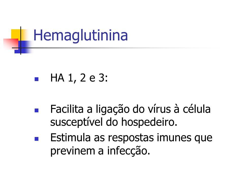 Hemaglutinina HA 1, 2 e 3: Facilita a ligação do vírus à célula susceptível do hospedeiro. Estimula as respostas imunes que previnem a infecção.