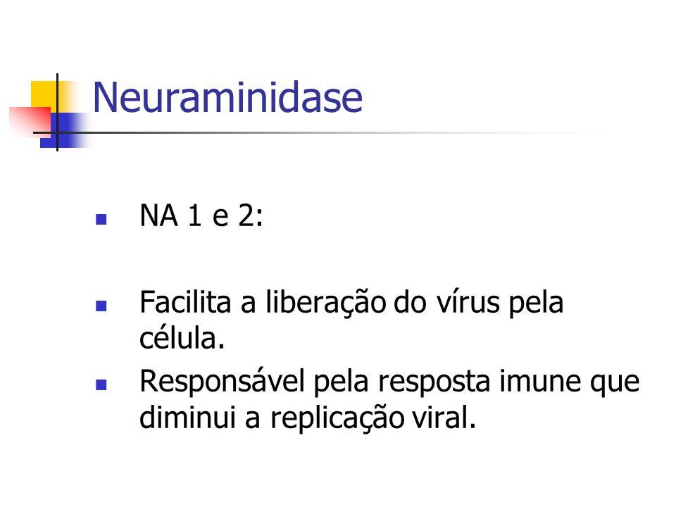 Neuraminidase NA 1 e 2: Facilita a liberação do vírus pela célula. Responsável pela resposta imune que diminui a replicação viral.