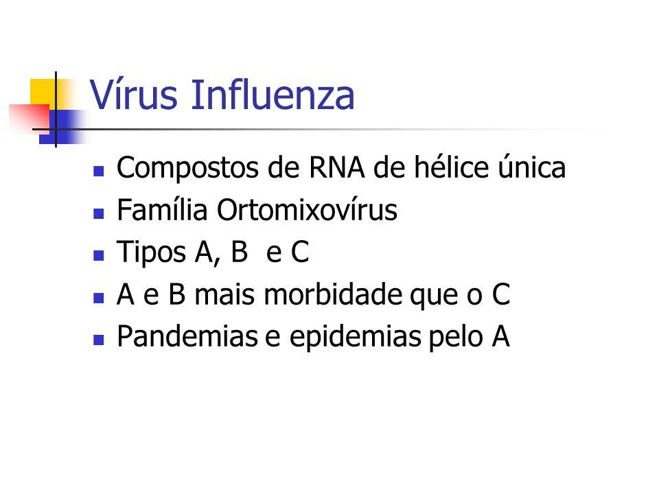 Vírus Influenza Compostos de RNA de hélice única Família Ortomixovírus Tipos A, B e C A e B mais morbidade que o C Pandemias e epidemias pelo A