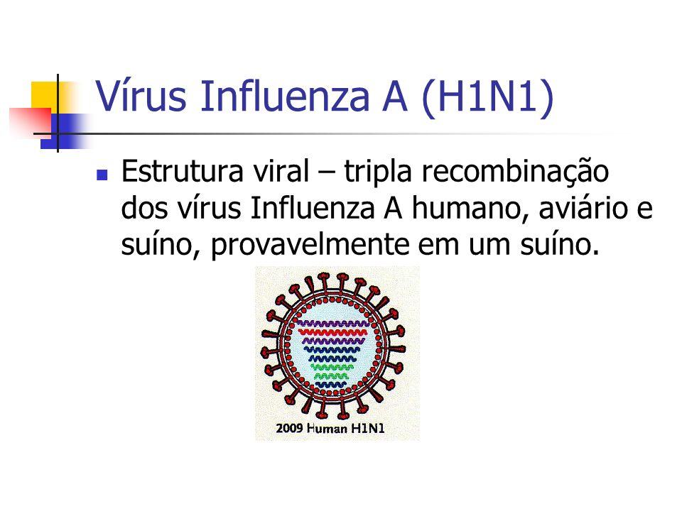 Vírus Influenza A (H1N1) Estrutura viral – tripla recombinação dos vírus Influenza A humano, aviário e suíno, provavelmente em um suíno.