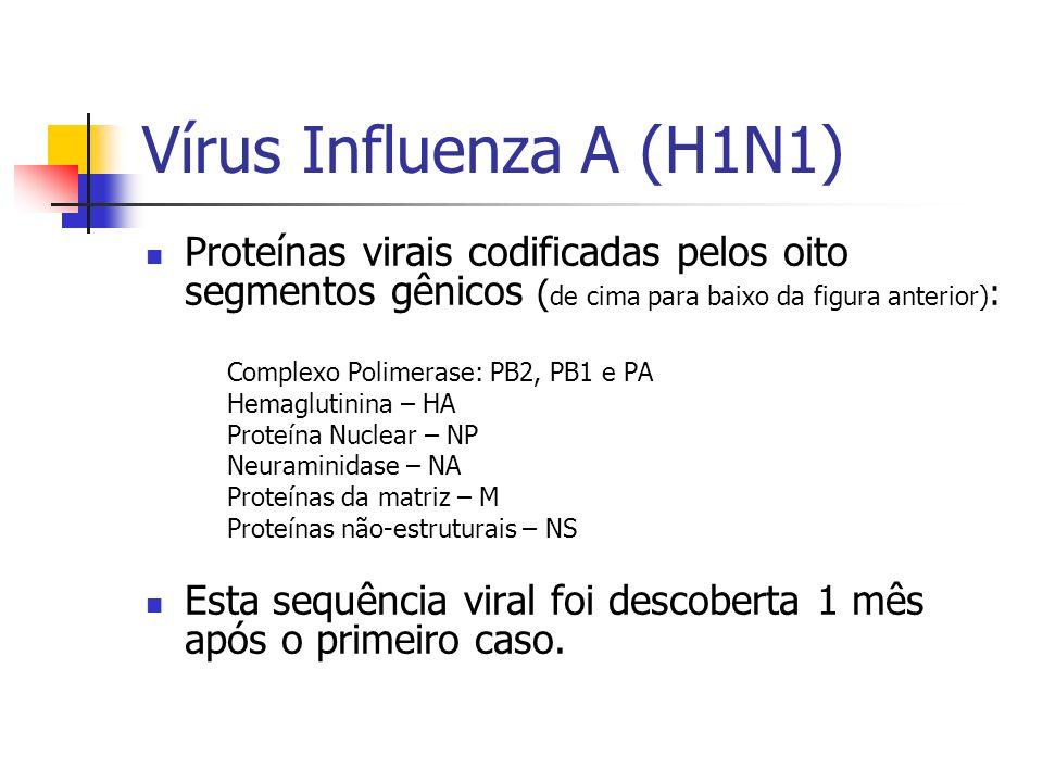 Vírus Influenza A (H1N1) Proteínas virais codificadas pelos oito segmentos gênicos ( de cima para baixo da figura anterior) : Complexo Polimerase: PB2