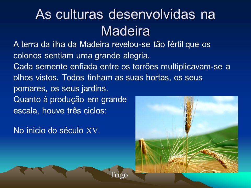 As culturas desenvolvidas na Madeira A terra da ilha da Madeira revelou-se tão fértil que os colonos sentiam uma grande alegria. Cada semente enfiada