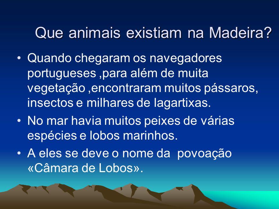 Que animais existiam na Madeira? Quando chegaram os navegadores portugueses,para além de muita vegetação,encontraram muitos pássaros, insectos e milha