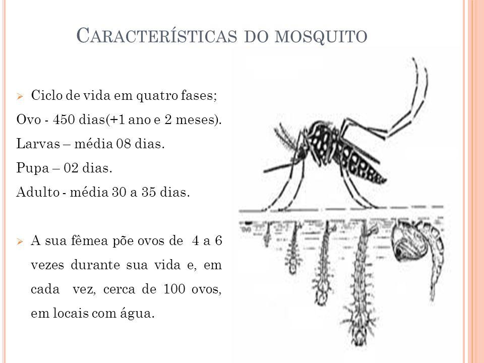 C ARACTERÍSTICAS DO MOSQUITO Ciclo de vida em quatro fases; Ovo - 450 dias(+1 ano e 2 meses). Larvas – média 08 dias. Pupa – 02 dias. Adulto - média 3