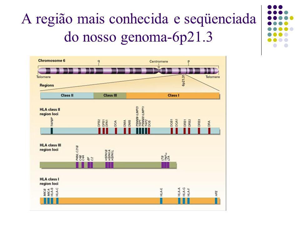 A região mais conhecida e seqüenciada do nosso genoma-6p21.3
