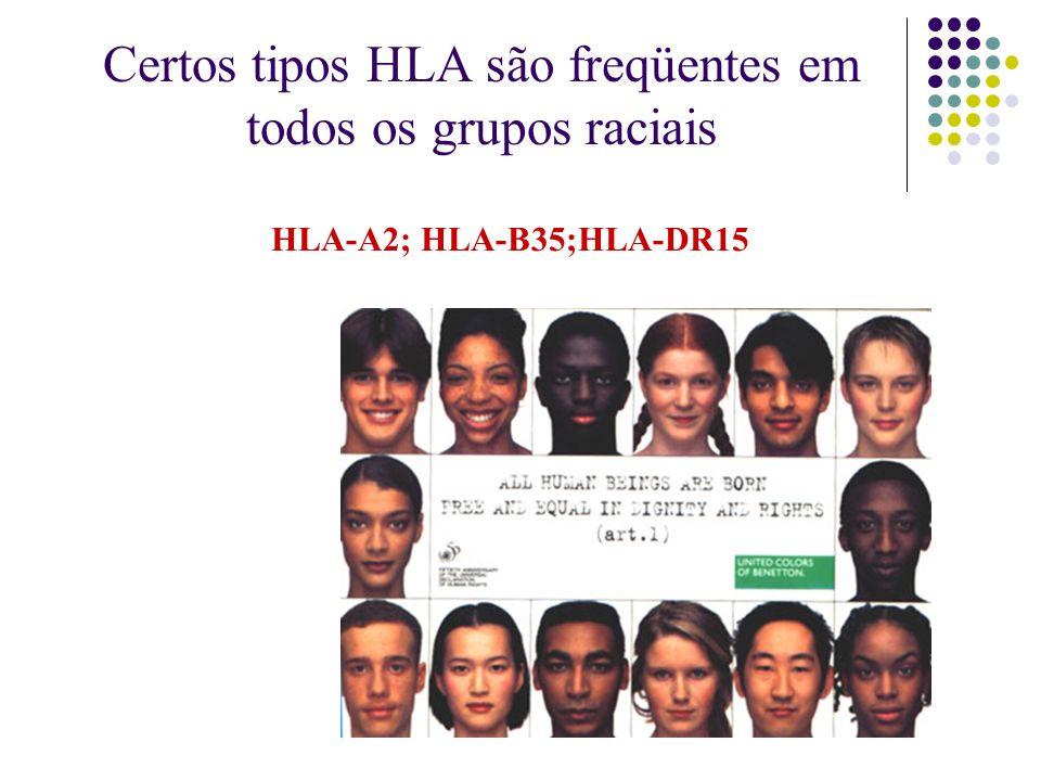 Certos tipos HLA são freqüentes em todos os grupos raciais HLA-A2; HLA-B35;HLA-DR15