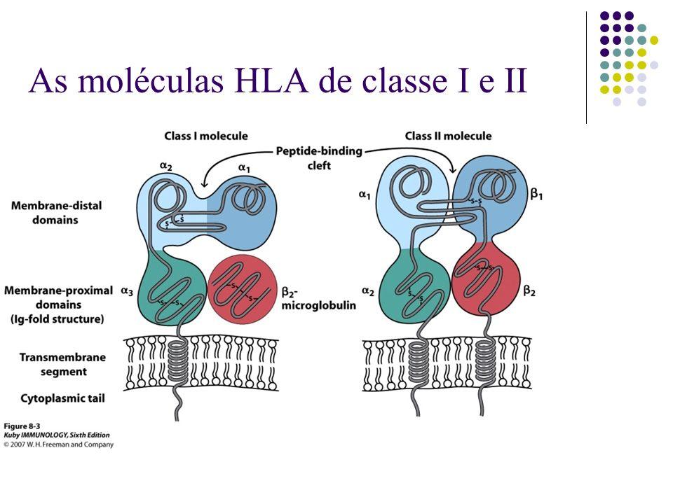 As moléculas HLA de classe I e II
