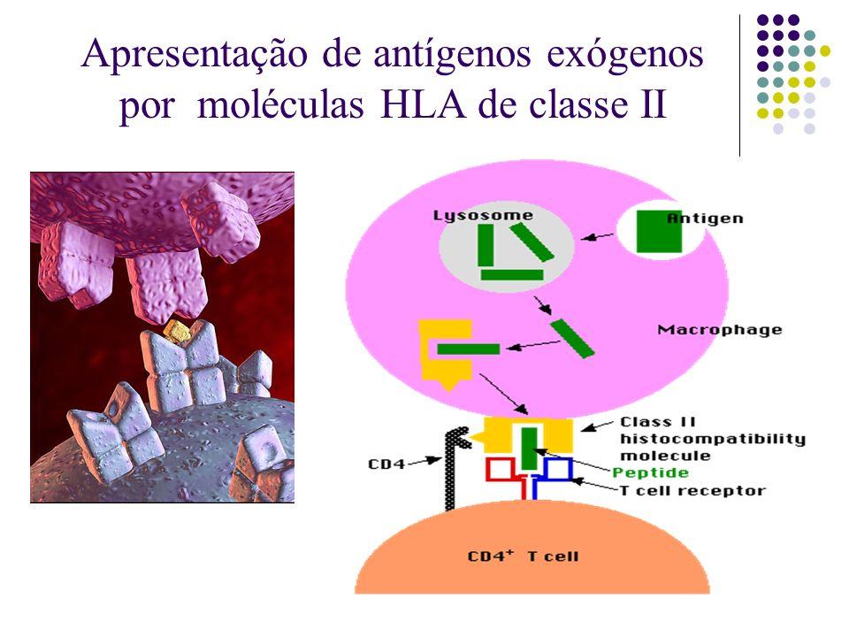 Apresentação de antígenos exógenos por moléculas HLA de classe II