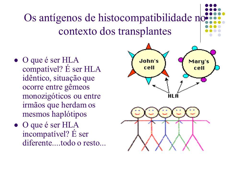 Os antígenos de histocompatibilidade no contexto dos transplantes O que é ser HLA compatível? É ser HLA idêntico, situação que ocorre entre gêmeos mon