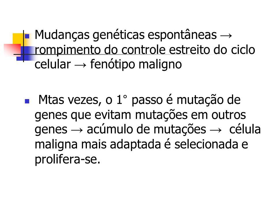 Mudanças genéticas espontâneas rompimento do controle estreito do ciclo celular fenótipo maligno Mtas vezes, o 1° passo é mutação de genes que evitam